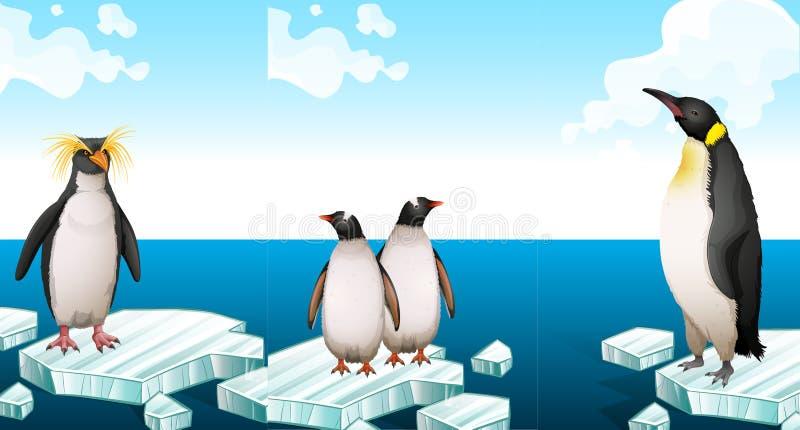 Pinguins que estão no iceberg ilustração royalty free