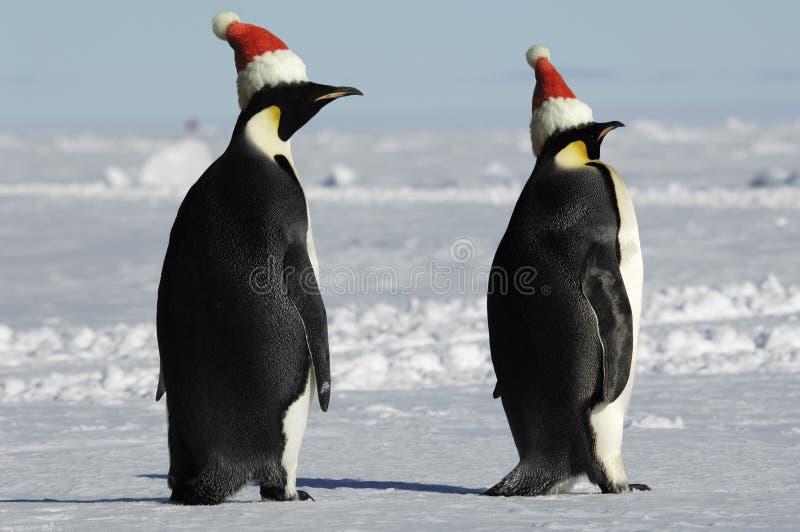 pingvin för juldagpar arkivbild