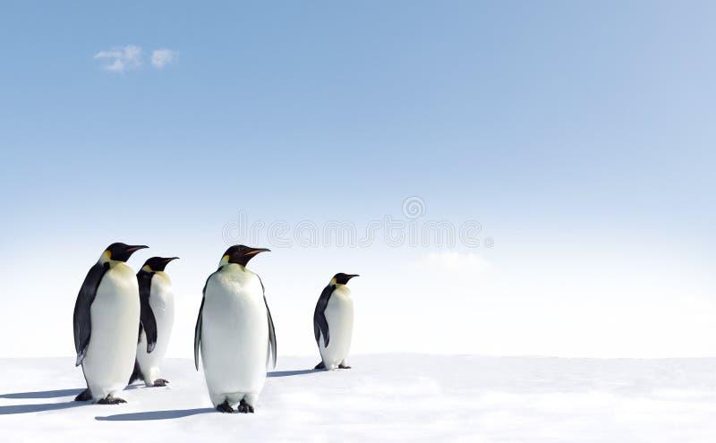 Pingvin i Antarktis   arkivfoton
