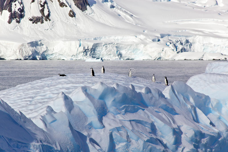 Pingvin på isberget, Antarktis arkivbild