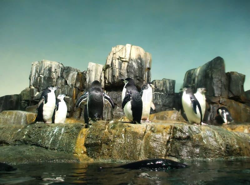 pingvinspelrum royaltyfri bild