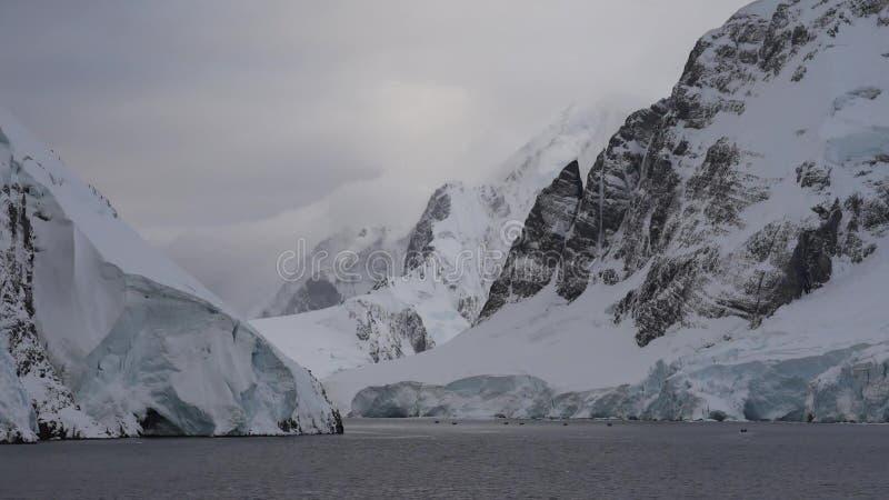 Pingviny-posle dobychi ryby Na-oddykhe lizenzfreie stockfotografie