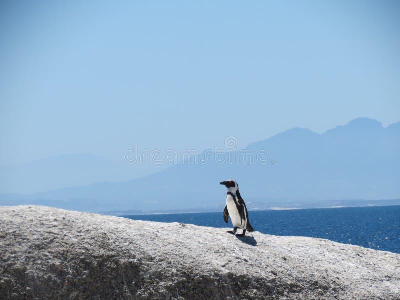 Pingwinów głazy Plażowy Południowa Afryka zdjęcie royalty free