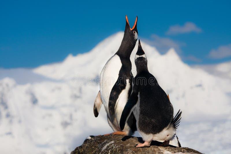 pingwinów target2123_1_ zdjęcie stock