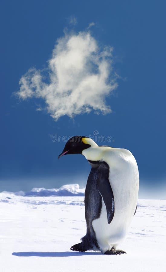 pingwin antarktyda zdjęcie royalty free