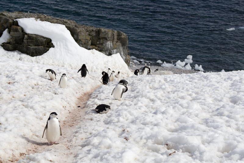 Download Pingwin autostrada zdjęcie stock. Obraz złożonej z śnieg - 33472798
