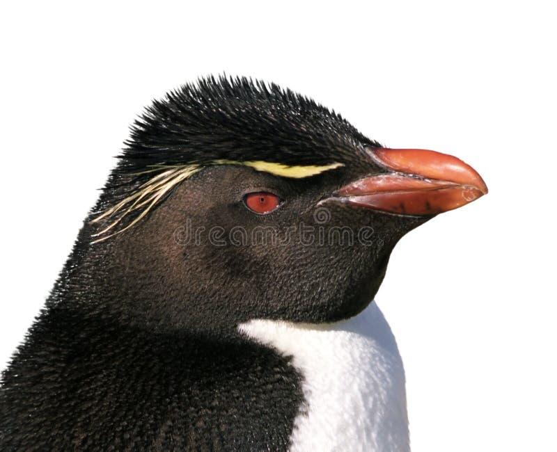 pingwinu odosobniony rockhopper zdjęcia royalty free