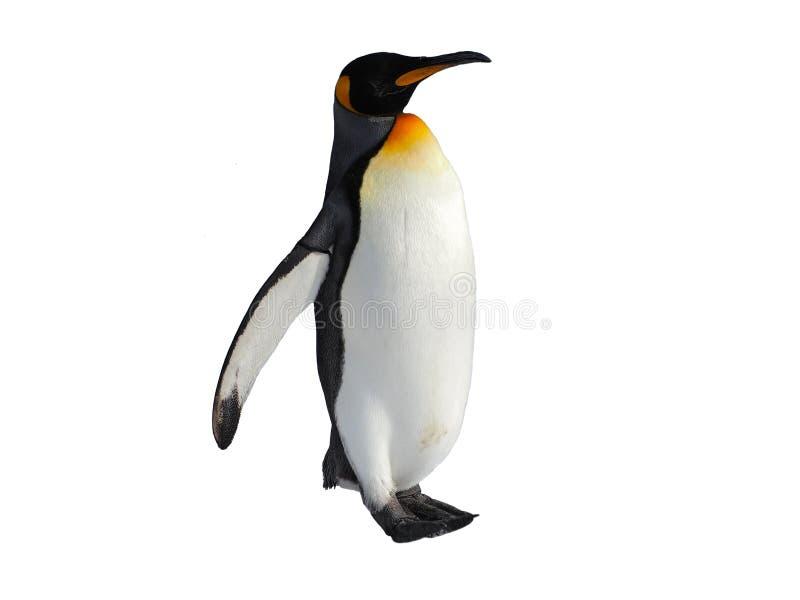 Pingwinu spacer odizolowywający na białym tle obraz royalty free