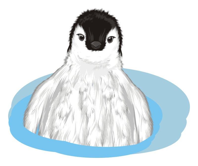 Pingwinu zerknięcie up od wody ilustracja wektor