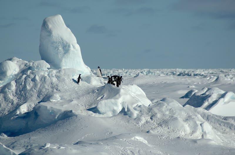 pingwiny antarctic obrazy stock