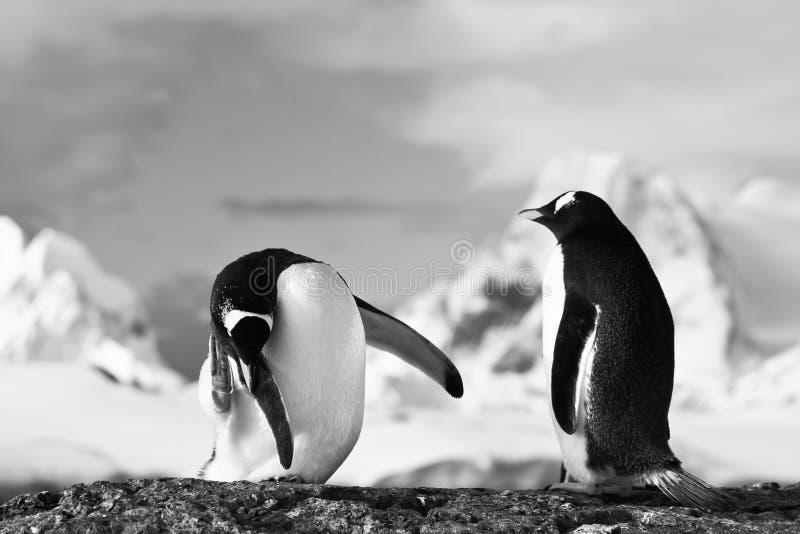 Pingwiny na skale zdjęcie stock