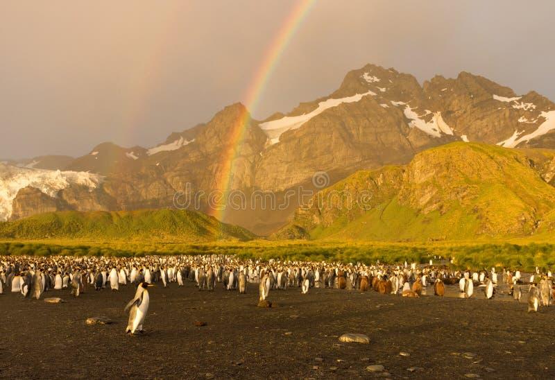 Pingwiny Pod tęczą przy wschodem słońca zdjęcie royalty free