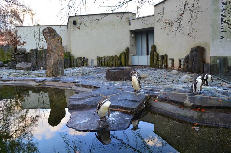 Pingwiny przy zoo obrazy stock