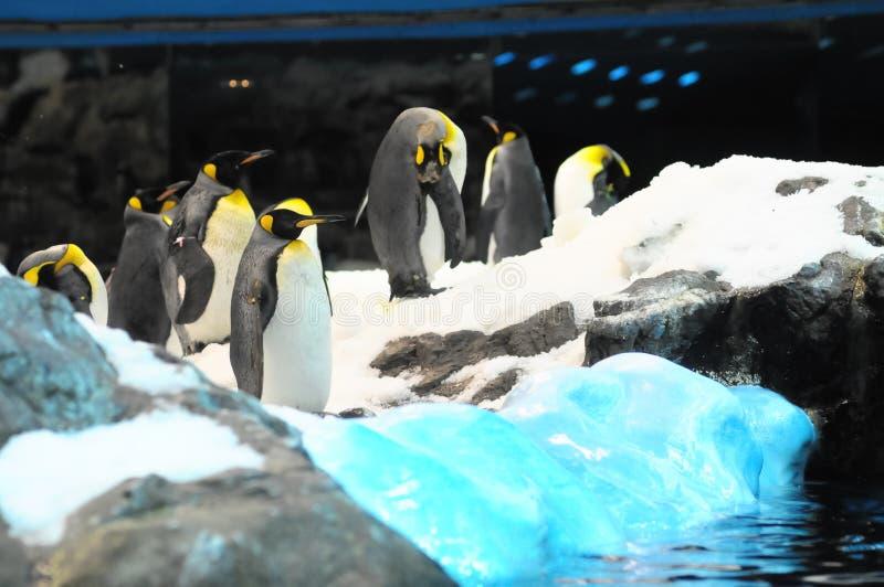 pingwiny w Antarctica, cyfrowy fotografia obrazek jako tło obrazy royalty free
