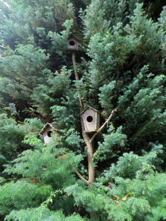 Pinheiro com as casas do pássaro da árvore imagens de stock