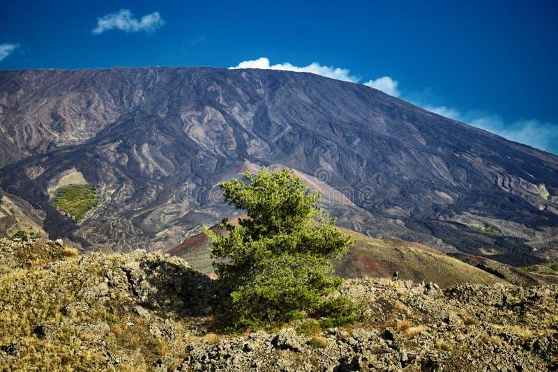 Pinheiro e inclinação solitários de Etna Volcano foto de stock