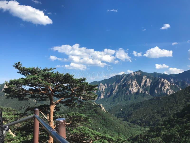Pinheiro e montanha alta bonitos no fundo Parque nacional de Seoraksan COREIA DO SUL imagens de stock royalty free