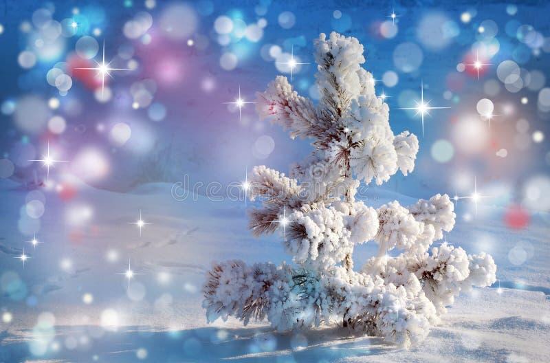 Pinheiro pequeno coberto de neve fotos de stock royalty free
