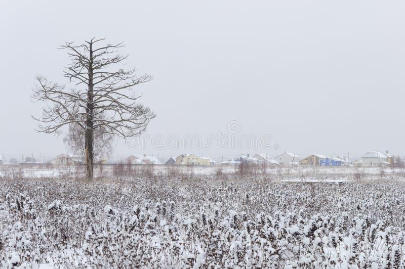 Pinheiro seco só no campo nevado imagem de stock