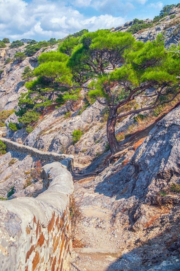 Pinheiro sozinho que cresce na inclinação da montanha no Crim fotos de stock