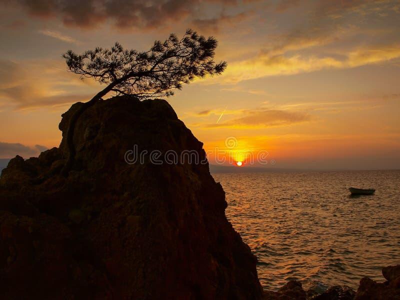 Pinheiro, suneset, mar 2 imagem de stock