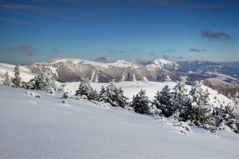 Pinheiros cobertos de neve e escala arredondada Eslováquia de Fatra dos picos foto de stock