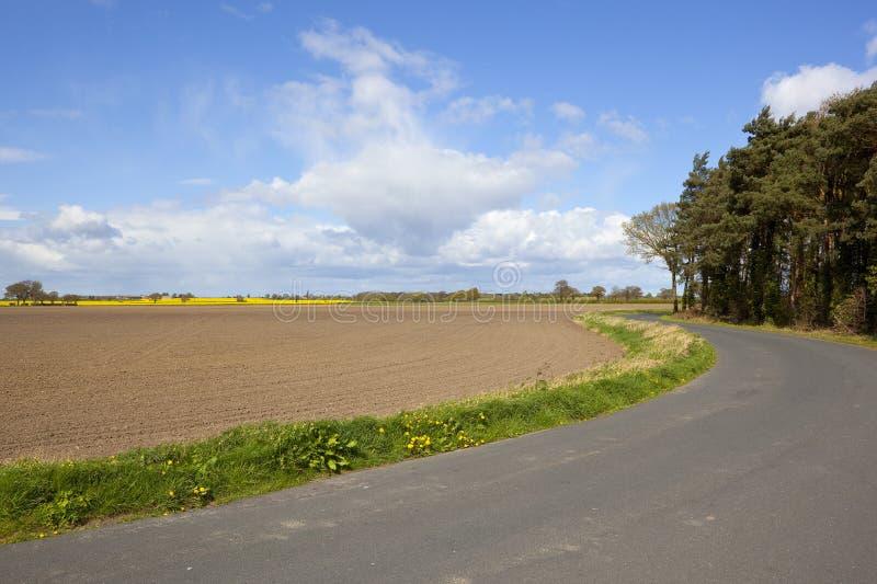 Pinheiros e estrada rural fotos de stock