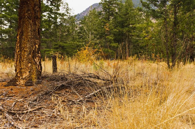 Pinheiros inferiores duff da floresta fotos de stock