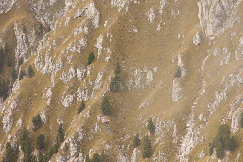 Pinheiros por muito tempo um lado de inclinação de uma montanha como a textura imagens de stock royalty free