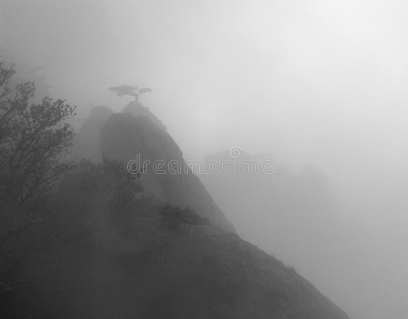 Pinho e rochas na névoa misteriosa imagem de stock