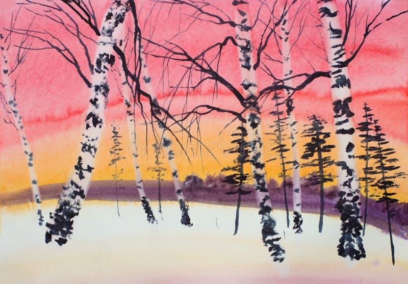 Pinho e vidoeiro do por do sol do inverno ilustração royalty free