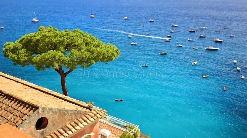 Pinho em Positano na costa de Amalfi, Itália imagens de stock
