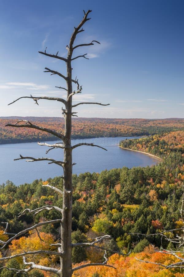 Pinho inoperante e lago cercados pela folhagem de outono - Ontário imagem de stock royalty free