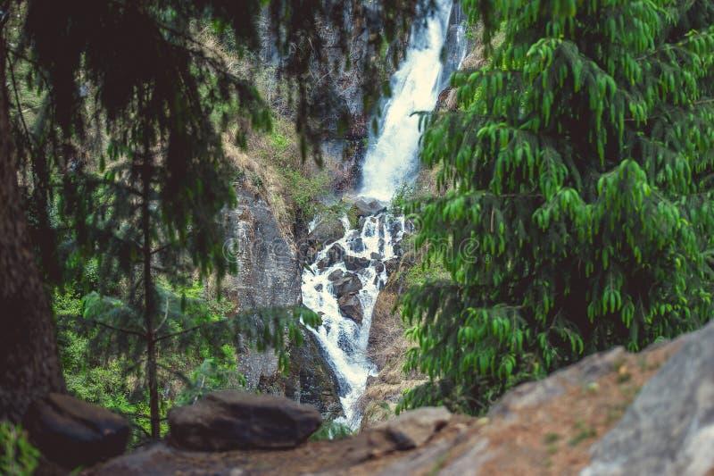 Pinho verde na cachoeira grande de Jogini do fundo em Vashisht foto de stock