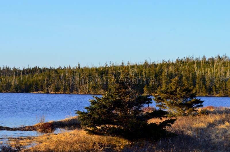 Pinhos ao longo do lago imagens de stock