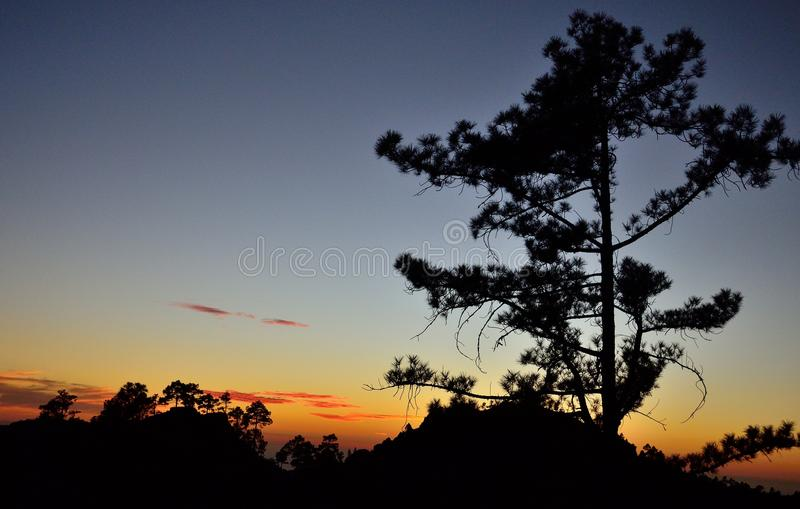 Download Pinhos Backlit No Anoitecer, Pilancones, Gran Canaria Foto de Stock - Imagem de ecology, sozinho: 107529612