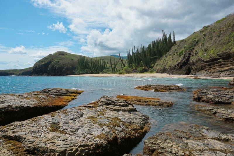 Pinhos da rocha da praia da paisagem de Nova Caledônia do litoral fotos de stock
