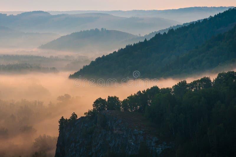 Pinhos encobertos nas névoas nos raios do alvorecer imagens de stock royalty free