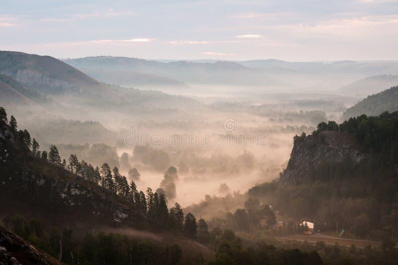 Pinhos encobertos nas névoas nos raios do alvorecer fotografia de stock