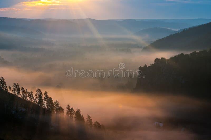 Pinhos encobertos nas névoas nos raios do alvorecer fotos de stock