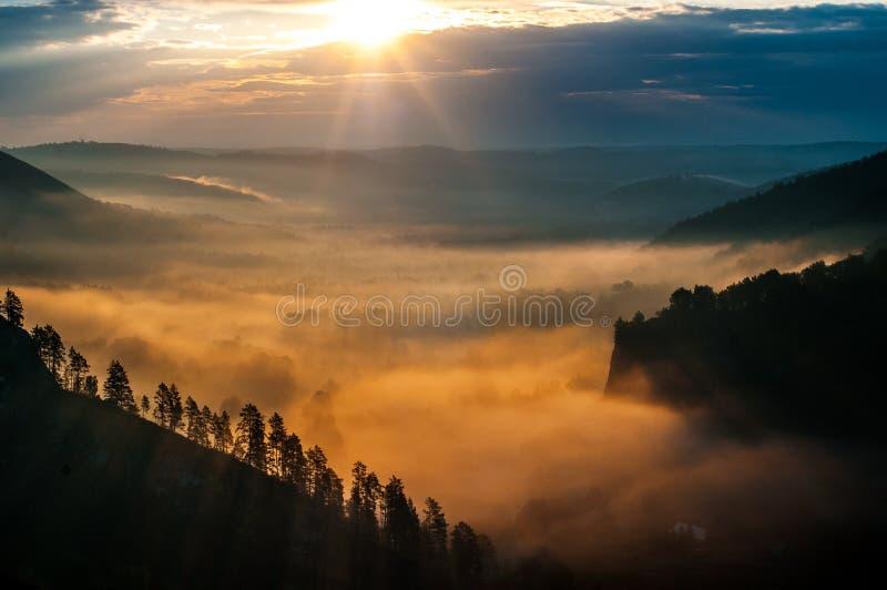 Pinhos encobertos nas névoas nos raios do alvorecer imagem de stock royalty free