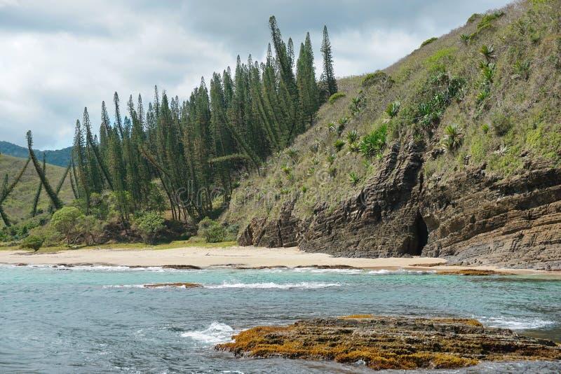 Pinhos litorais da praia do penhasco da paisagem de Nova Caledônia fotos de stock