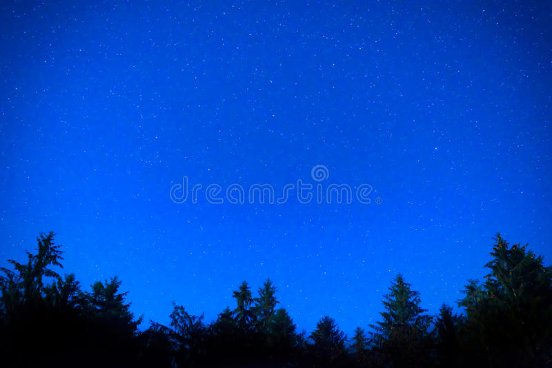 Pini blu scuro di notte sopra il cielo immagini stock