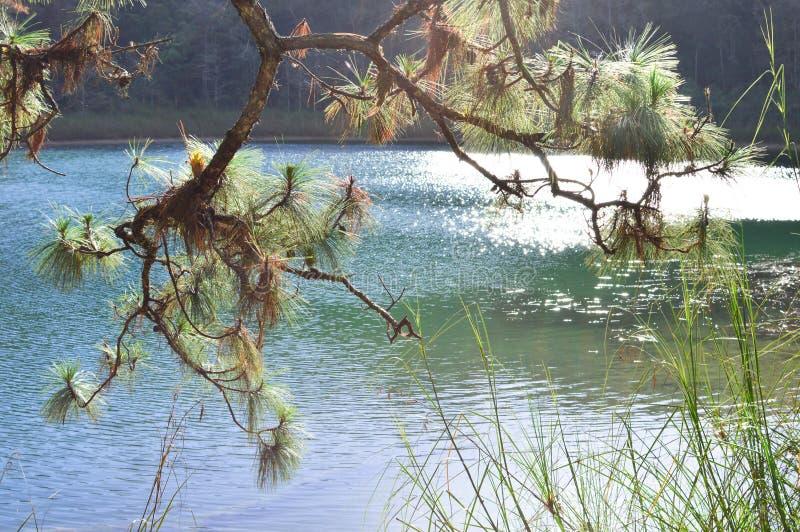 Pini dal lago nel Chiapas, Messico immagine stock libera da diritti