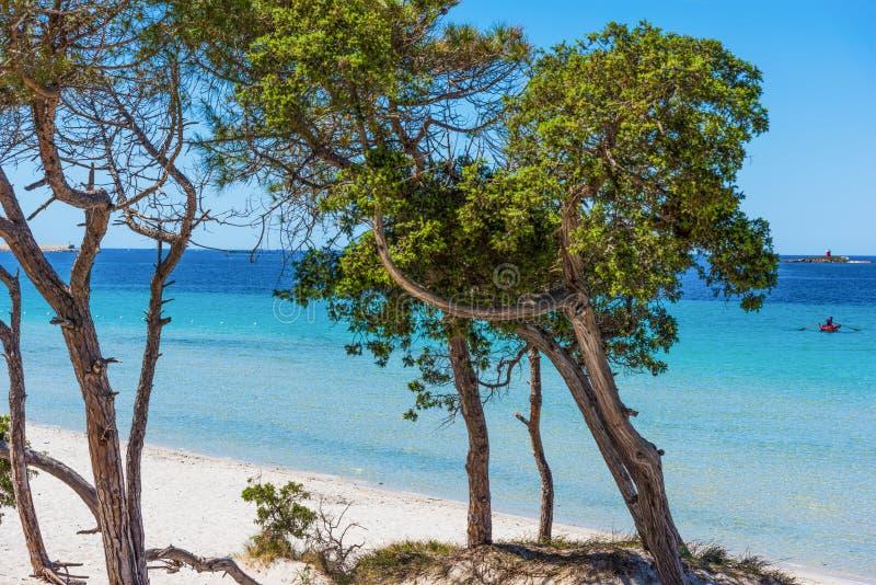 Pini dal mare in spiaggia di Maria Pia fotografie stock libere da diritti
