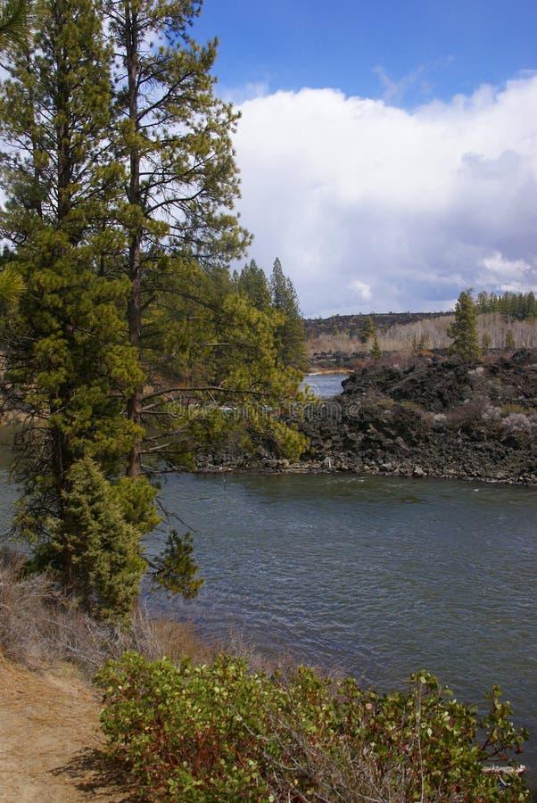 Pini di Ponderosa e canyon del fiume fotografie stock
