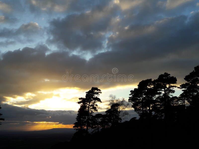 Pini di tramonto fotografie stock
