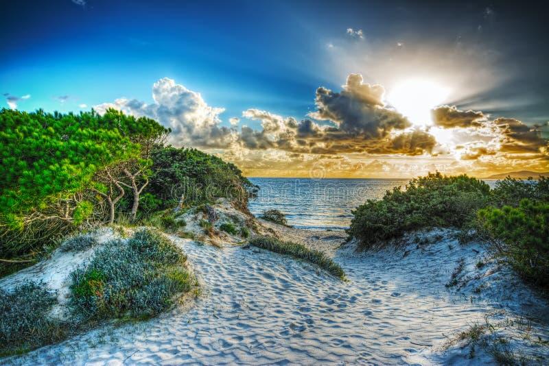 Pini e dune al tramonto immagini stock