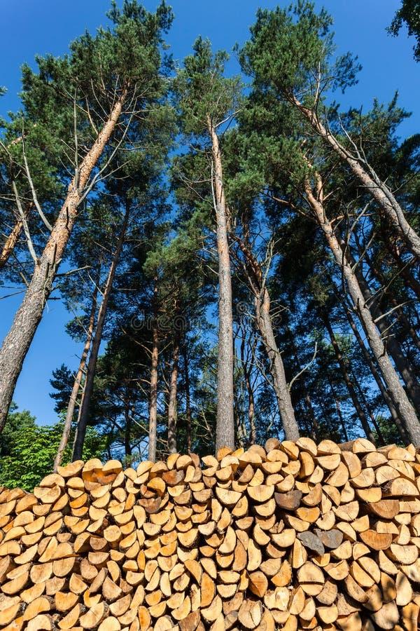 Pini e mucchio dei ceppi di legno fotografia stock libera da diritti