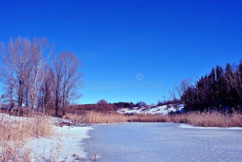 Pini e pioppi sulle colline, canne marcie sulla riva del lago con ghiaccio di fusione, su un fondo del cielo soleggiato blu della fotografia stock